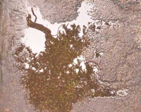 Árbol agua