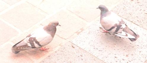 Palomas en Coyoacán
