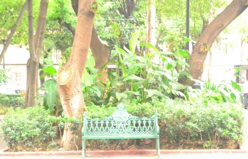 Parque de Pino