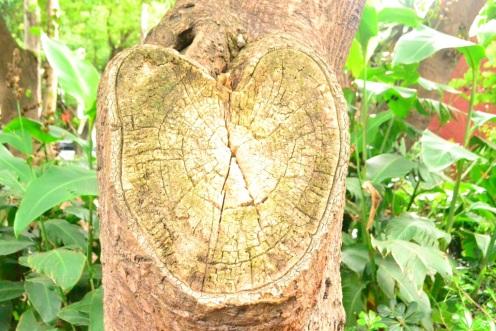 Corazón en Parque Pino