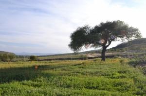 Rancho. Querétaro.