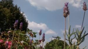 Cielo Y Plantas DF