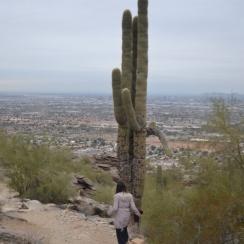 Saguaro. South Mountain Park. Mormon Trail.