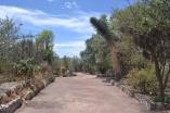 Jardín Botánico de Teotihuacán