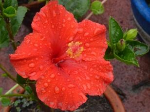 Mis flores en la lluvia