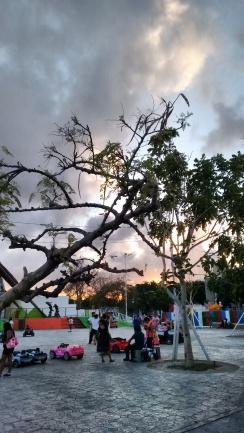 Parque de las Palapas (2)