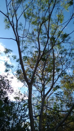 ¡A trotar! Parque Kabah. Cancún Quintana Roo.