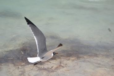 Playa Maya Cancún (3)