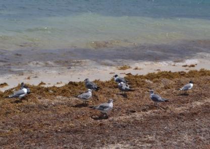 Puerto Morelos (2)