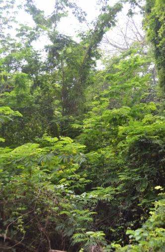 Tabasco Villahermosa