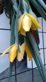 Exhibición de Orquídeas Centro Cultural Isidro Fabela, Casa Risco Plaza Jacinto San Ángel