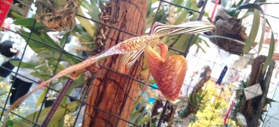 orquídea corazón