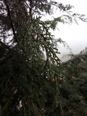 Frente a nuestra habitación, esta belleza y mucha niebla. Mineral del Monte (Real del Monte) Hidalgo