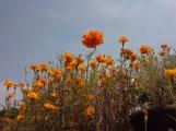 Jardín de Cempasúchil