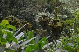 Jardín escultórico surrealista de Edward James Xilitla, San Luis Potosí