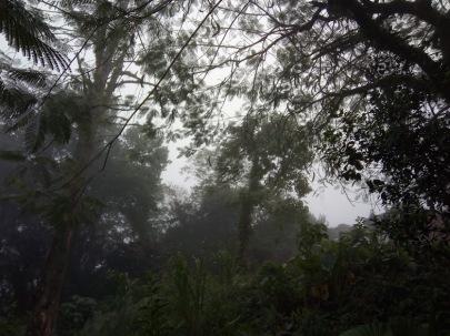 xilitla niebla